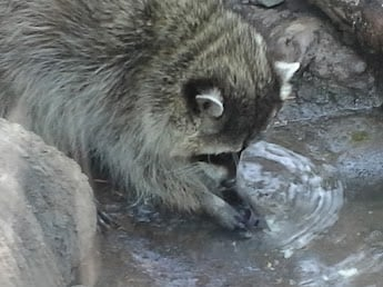 Washing His Food Off Yelp