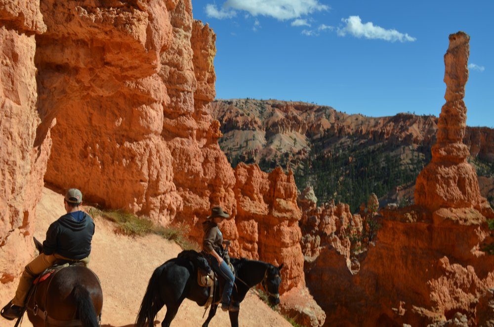 Canyon trail rides 23 photos 24 reviews stables for Where can i go horseback riding near me
