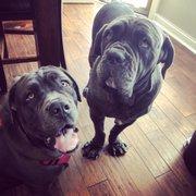 mastiffs to mutts