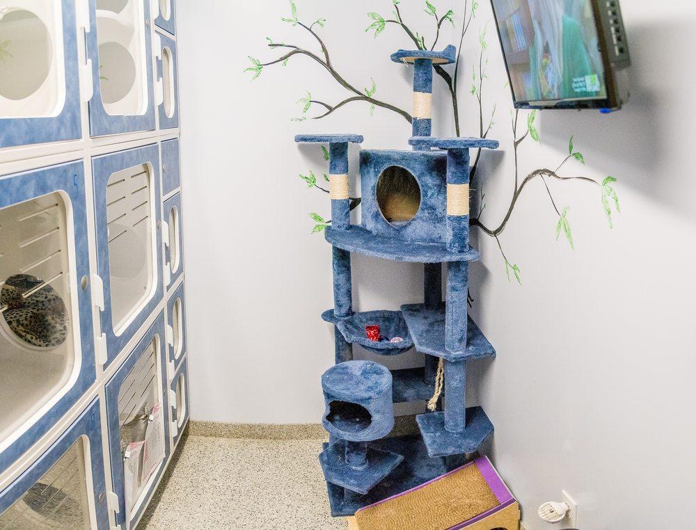 Anaheim Hills Pet Clinic