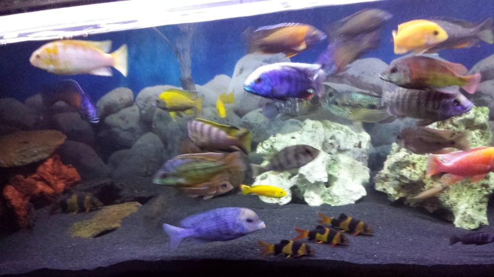 Ocean Blue Closed 23 Reviews Pet Shops 1215 W