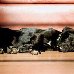 Photo Of Carpet One Floor And Home   Paris, TX, United States. Carpet ...
