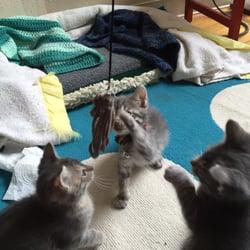 Under Dog Pet Rescue Madison