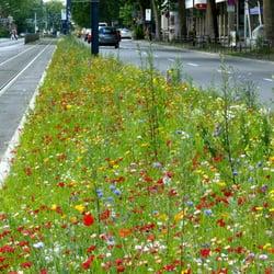 Landschafts und forstamt regiebetrieb gartenbau for Landschafts und gartenbau