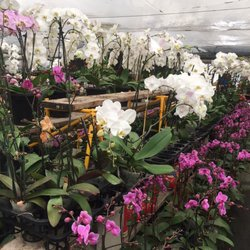 Photo Of Eplant World San Francisco Ca United States Orchids
