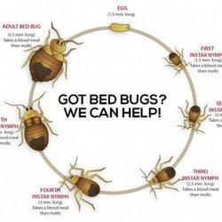 Photo Of Bed Bug Removal Phoenix   Phoenix, AZ, United States