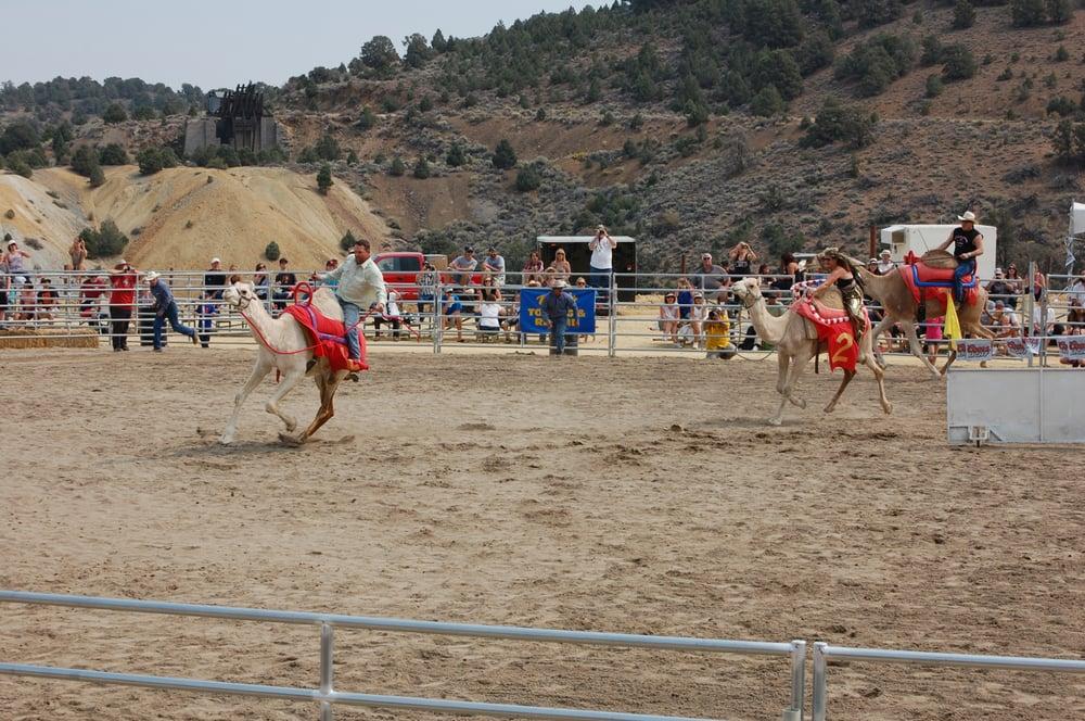 International Camel & Ostrich Races