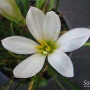 Photo Of Sakioka Whole Nursery Inc Westminster Ca United States