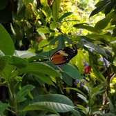 Photo Of Museum Of Science   Boston, MA, United States. The Butterfly Garden
