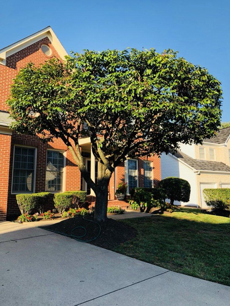 Cheapside Lawn Service: 5235 Navaho Dr, Alexandria, VA