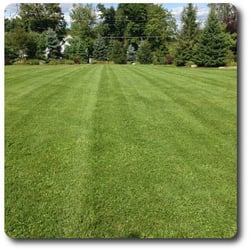 Photo Of Abaco Lawn Care Palm Bay Fl United States