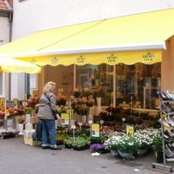 Blumenladen Detmold blumen risse blumenladen florist schloßplatz 3 detmold