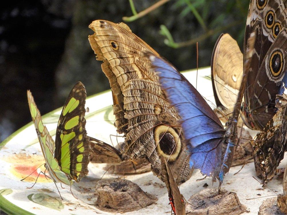 The Original Mackinac Island Butterfly House and Insect World: 6750 McGulpin St, Mackinac Island, MI