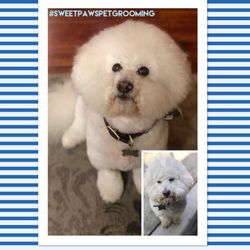 Sweet Paws Pet Grooming 85 Photos 68 Reviews Pet Groomers
