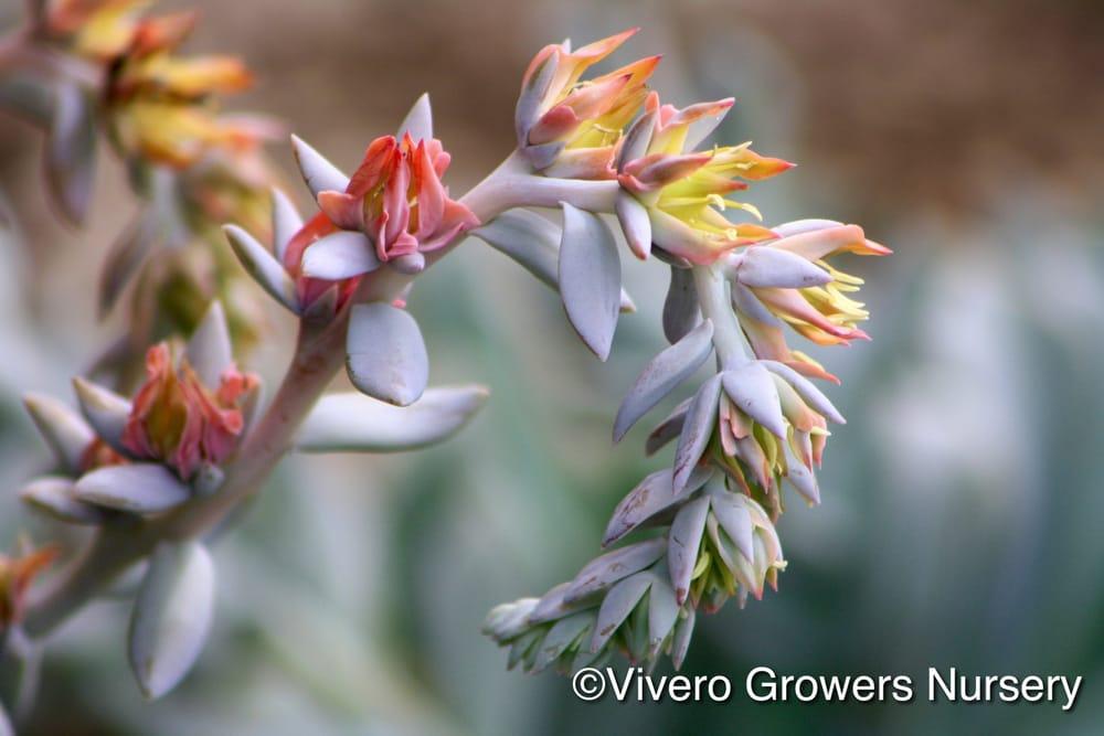 Vivero Growers Nursery