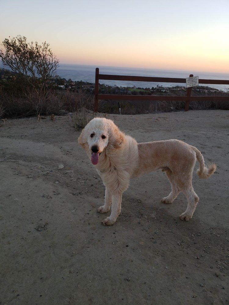 Laguna Beach Veterinary Medical Center