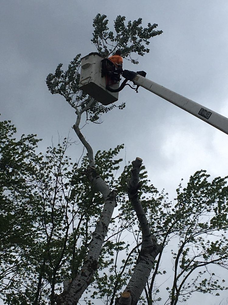 Leroy's Tree Service And Stump Removal: Medaryville, IN
