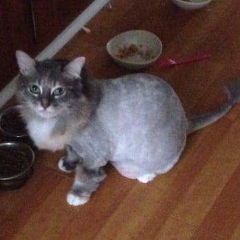 The Best Little Cat House Burbank Ca