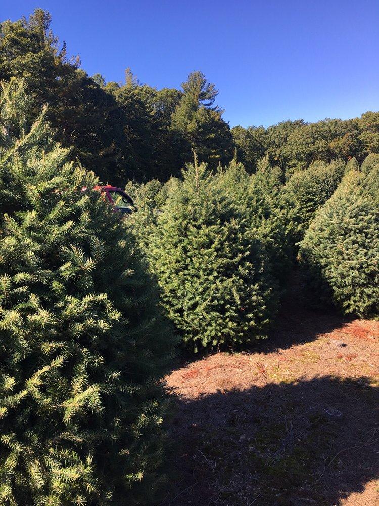 Photo of Henry's Christmas Tree Farm - Hope, RI, United States - Photos For Henry's Christmas Tree Farm - Yelp