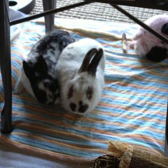 San Diego House Rabbit Society - 36 Photos & 30 Reviews - Animal ...