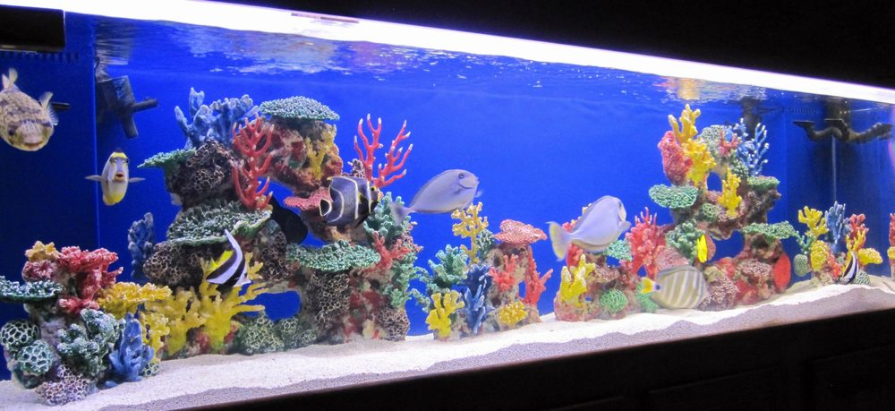 Artificial Coral Reef Yelp
