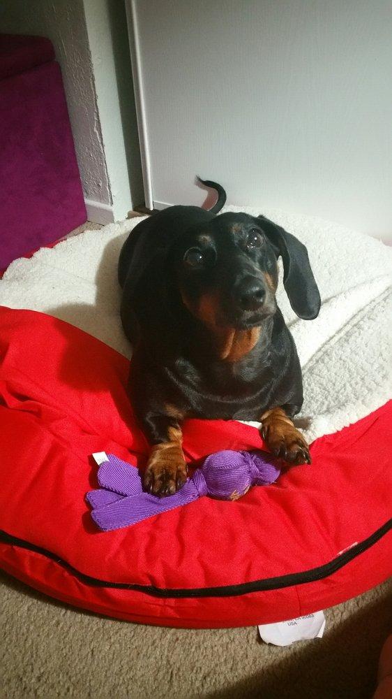 Debbie's Dog Grooming: 14550 Lakeshore Dr, Clearlake, CA