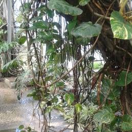 photo of jardin des plantes lille france george de la jungle - Jardin Des Plantes Lille