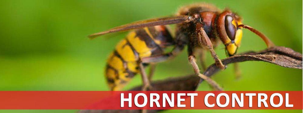 Wise / Chem Safe Pest Control: Granbury, TX
