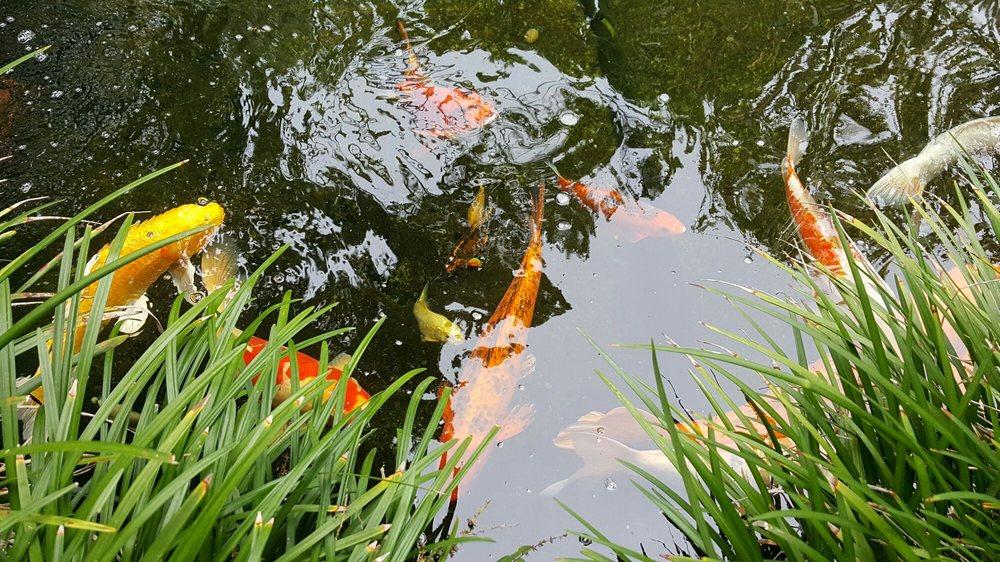 Self Realization Fellowship Hermitage Meditation Gardens 765 Photos 309 Reviews