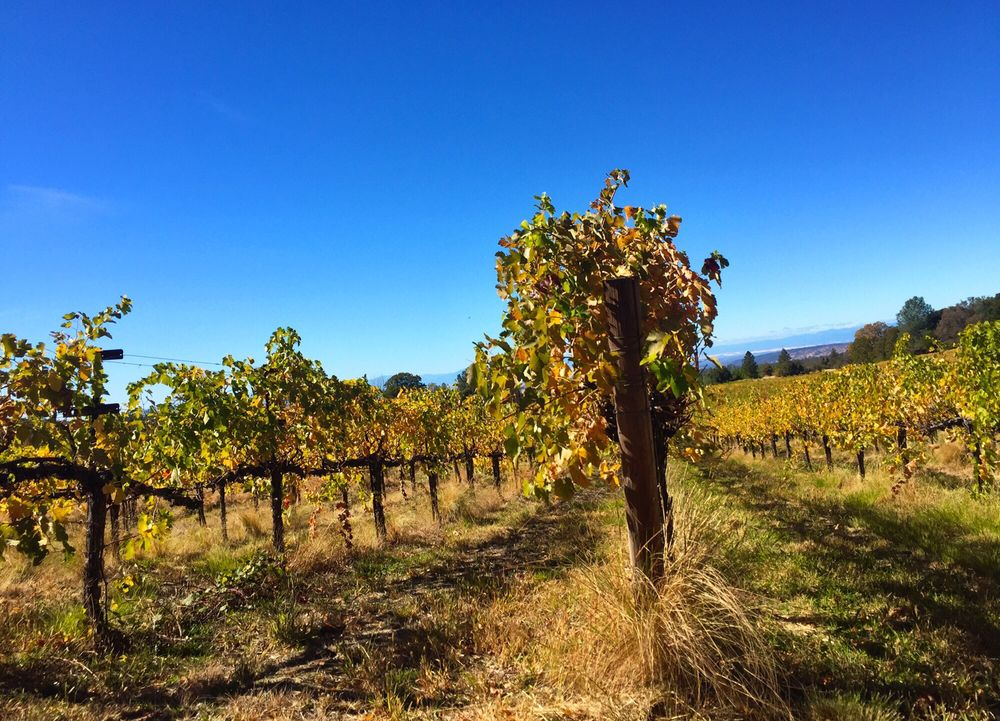 Alger Vineyard & Winery: 31636 Forward Rd, Manton, CA