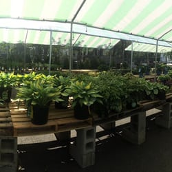 Photo Of Treeland Garden Center Nursery Bridgeport Ct United States