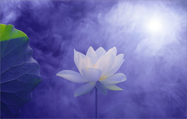 Lotus flower symbolizing many things including spiritual awakening photo of serenity through hypnosis san rafael ca united states lotus flower mightylinksfo