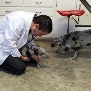 Pet wash 13 photos 27 reviews pet groomers 5667 n las all animals veterinary hospital solutioingenieria Gallery