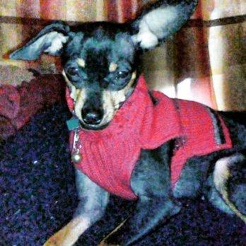 5a8ecd2fc3 Photo of Puppy Love Socialization Center & Spa - Ferndale, MI, United  States.