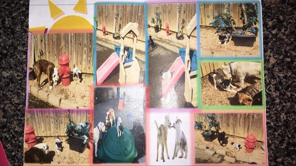 All Dogs Club: 5115 Berwyn Rd, College Park, MD