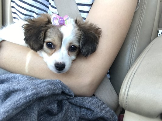 Puppies 4 Less 31285 Temecula Pkwy Temecula Ca Pet Shops Mapquest