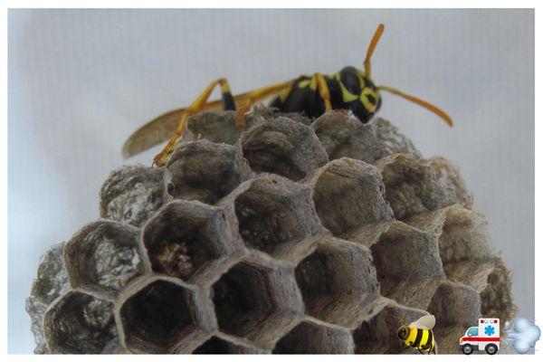 A Team Wildlife Removal & Bee Removal Miami