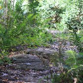 Jacksonville Arboretum And Gardens 203 Photos 28 Reviews Botanical Gardens 1445 Millcoe