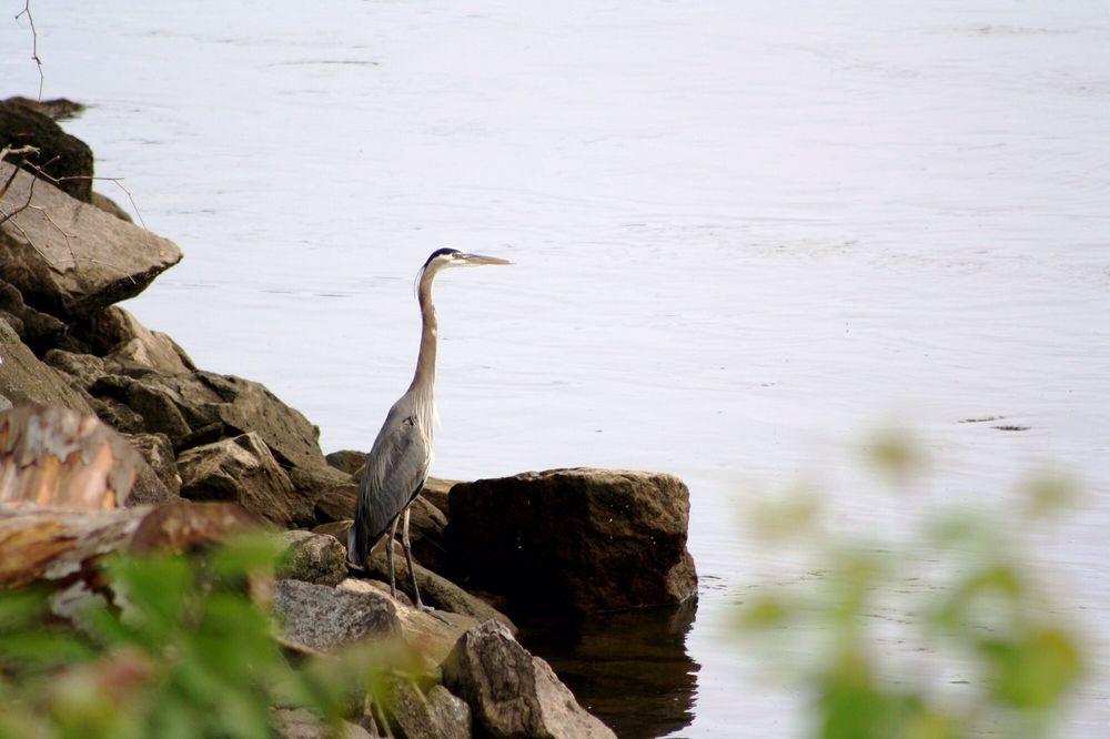 Conowingo Fisherman's Park: Shureslanding Rd, Darlington, MD