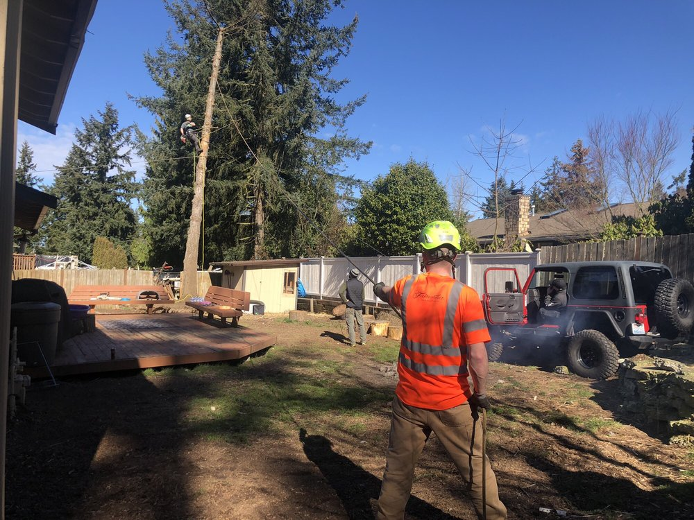 Infinity Tree Services: Des Moines, WA