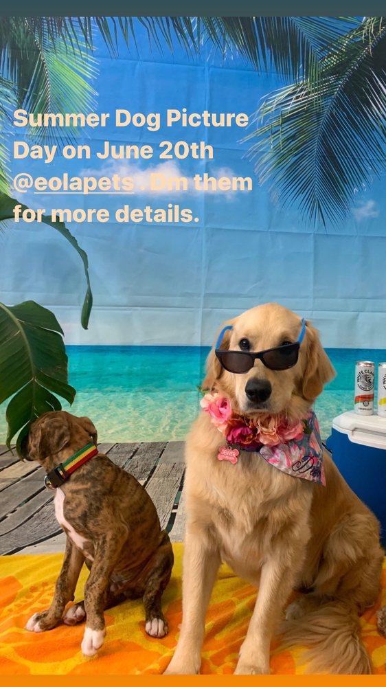 Eola Pets: 420 E Church St, Orlando, FL