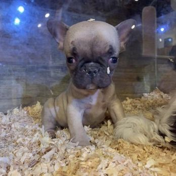 Pick of the Litter - 48 Photos & 141 Reviews - Pet Stores