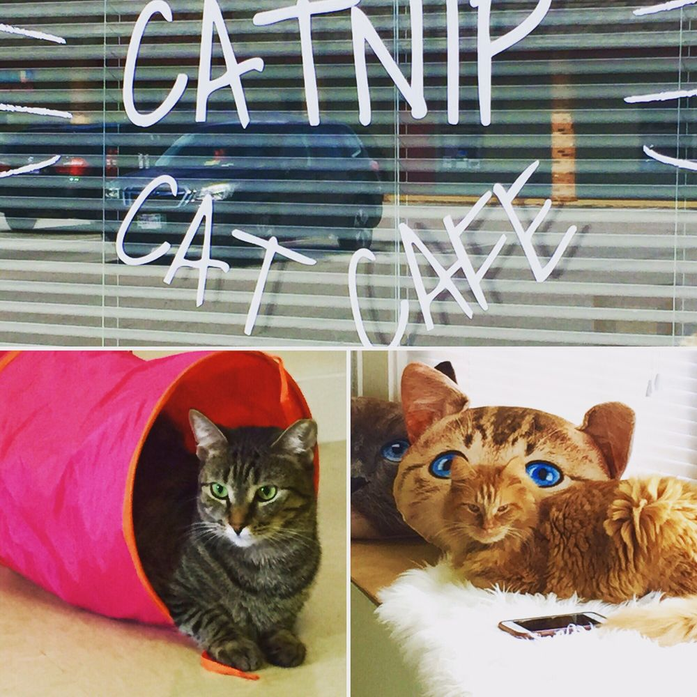 Catnip Cat Cafe: 2200 Colonial Ave, Norfolk, VA