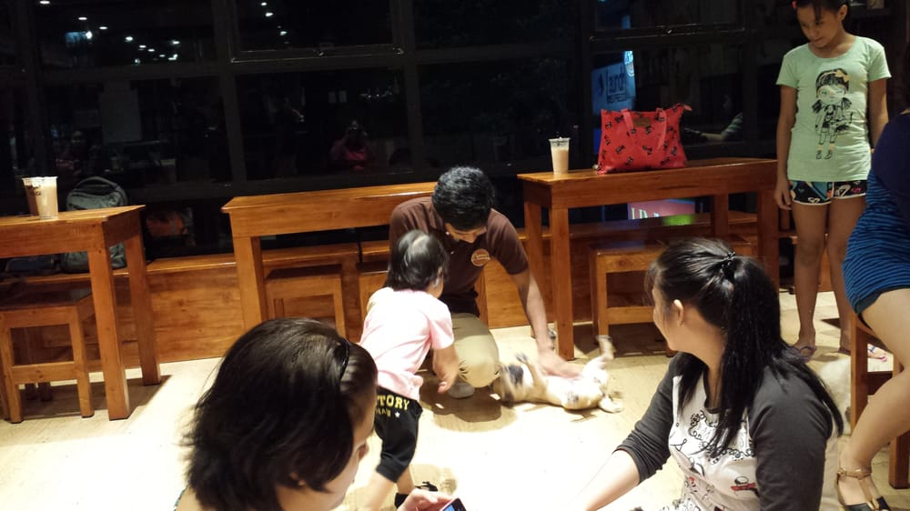 On Dog Dog Cafe Hong Kong Yelp