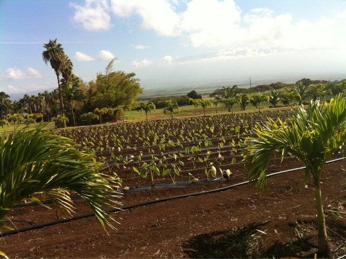 Restaurants Near Wailuku Maui