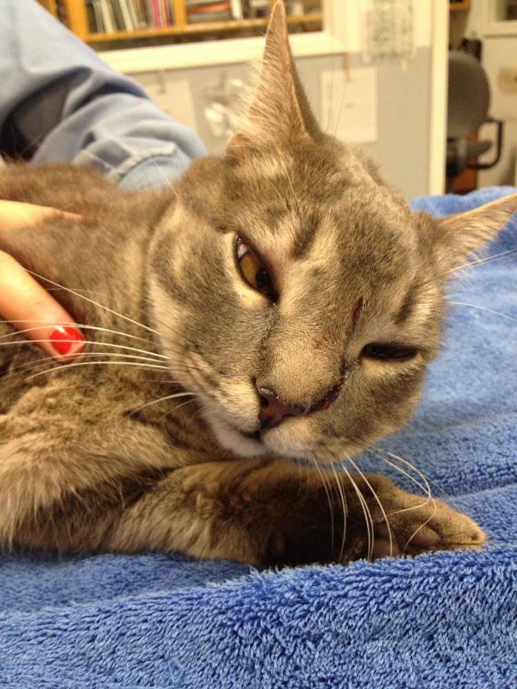hairless cats breeders