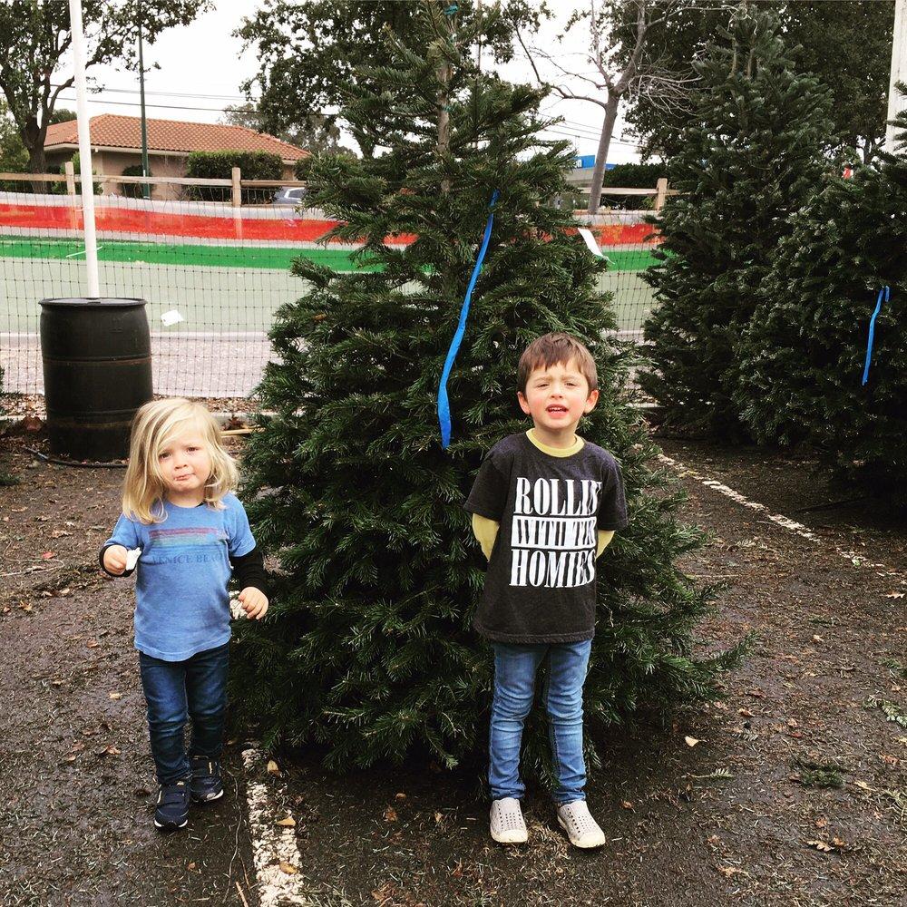 toby u0027s christmas trees 15 reviews christmas trees 301 n san