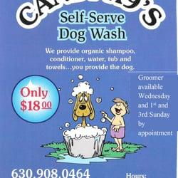 Candi k9s dog wash groom closed 10 reviews pet groomers photo of candi k9s dog wash groom elk grove village il united solutioingenieria Choice Image