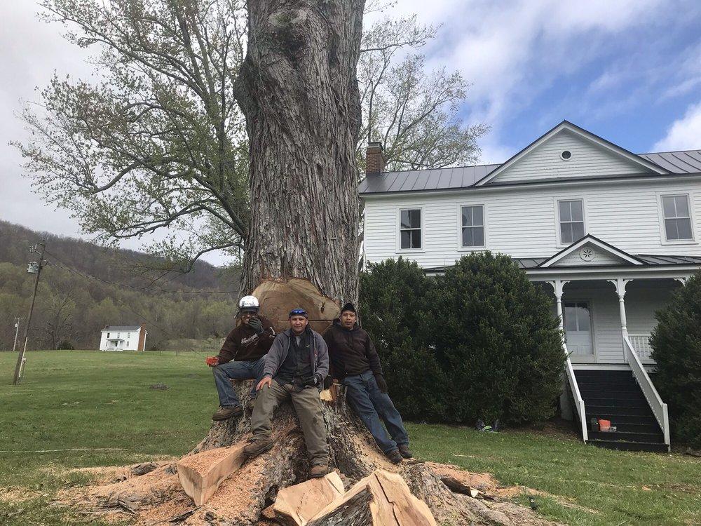 RMZ Tree Service: 328 Woodys Lake Rd, Madison Heights, VA