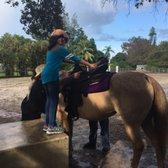 happy pony world davie